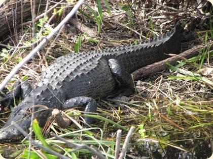 Everglades Highway 020
