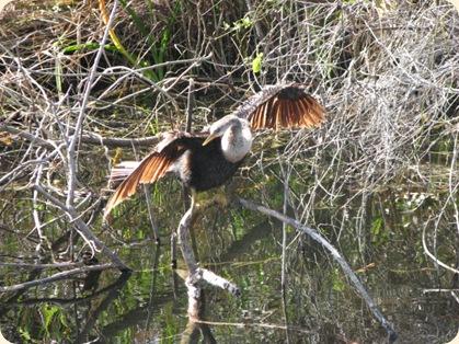Everglades Highway 037