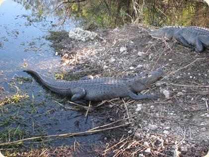 Everglades NP 121