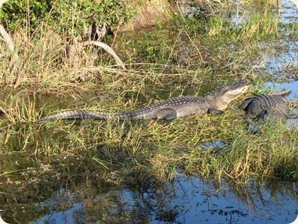 Everglades NP 124