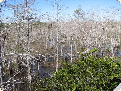 Everglades NP 054