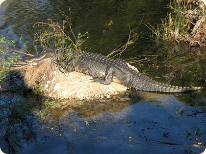 Everglades NP 119