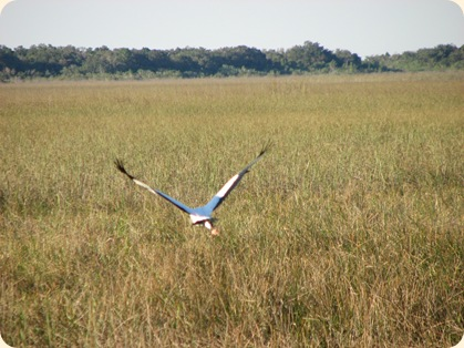 Everglades NP 129