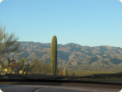Saguaro National Park 081