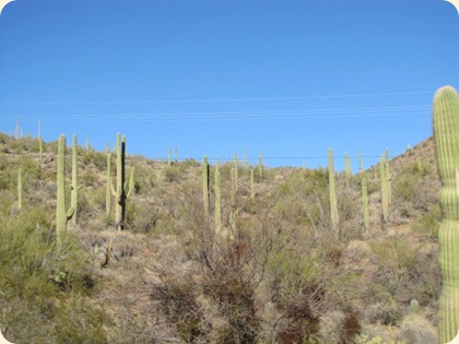 Saguaro National Park 005