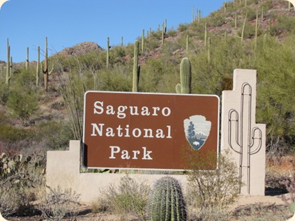 Saguaro National Park 019