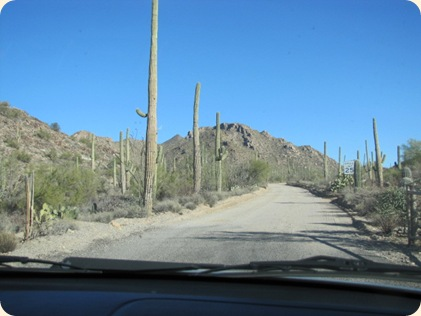 Saguaro National Park 031