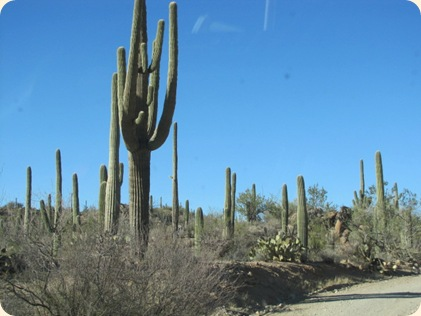 Saguaro National Park 041