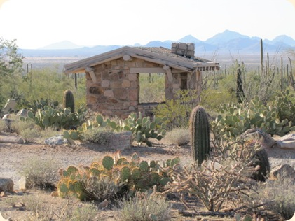 Saguaro National Park 047