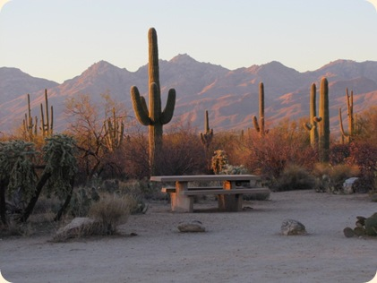 Saguaro National Park 088