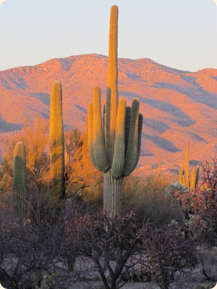 Saguaro National Park 091