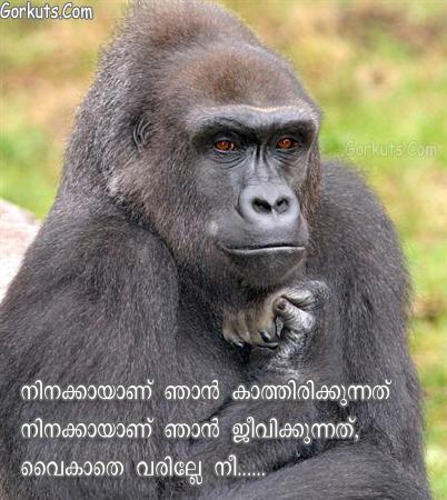orkut Malayalam fun scraps , mallu fun scrap,funny images,malayalam scrap