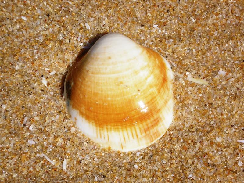 Praia do Carvalhal, concha