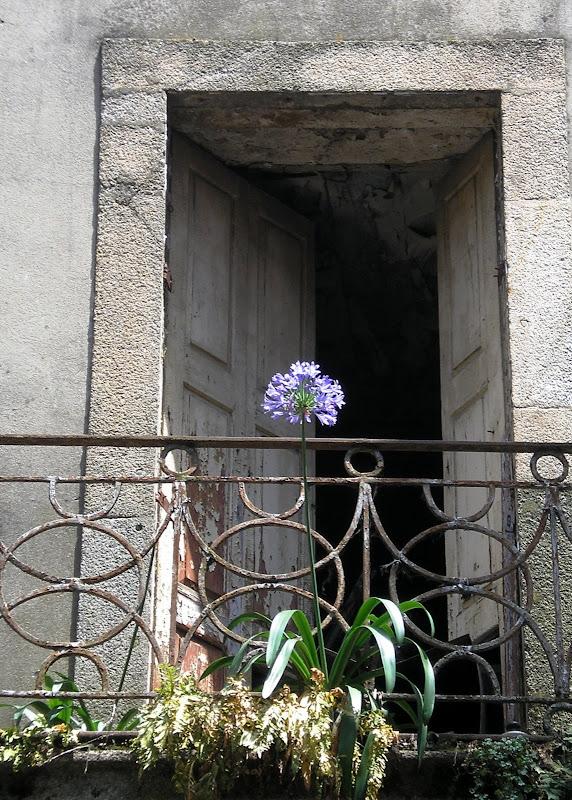 Flor em Janela no Porto