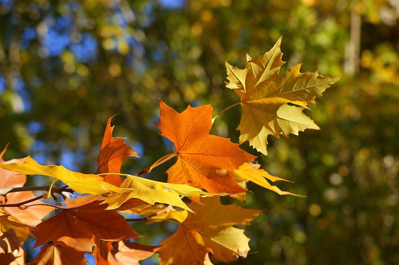 Folhas, Outono em Setúbal