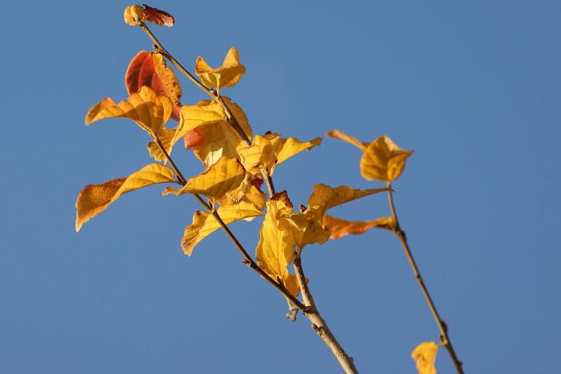 O resto do Outono