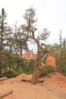 BryceCanyonNP_20100818_0313.JPG Photo