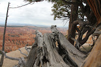 BryceCanyonNP_20100818_0232.JPG Photo