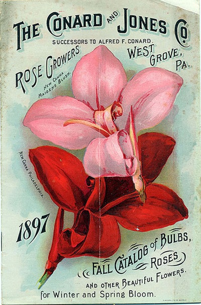 Catalog of Bulbs