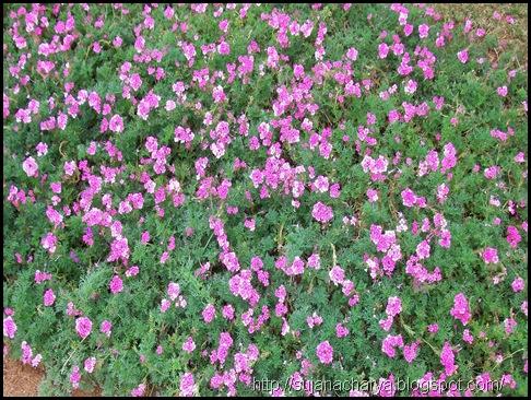 flower (17)
