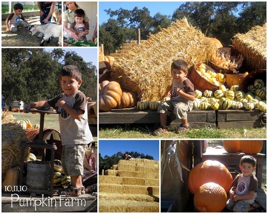 papi pumpkin 10
