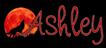 Ashleys bookshelf signature