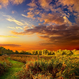 Along The Way by Phil Koch - Landscapes Prairies, Meadows & Fields ( vertical, photograph, bench, fine art, yellow, travel, leaves, love, sky, nature, tree, autumn, trail, picnic table, light, flower, orange, twilight, agriculture, horizon, forest, portrait, dawn, serene, outdoors, trees, floral, natural light, wisconsin, ray, landscape, phil koch, sun, photography, blue sky, path, horizons, office, clouds, park, green, back light, scenic, morning, woods, shadows, wild flowers, field, red, blue, color, sunset, peace, fall, meadow, landscapephotography, beam, sunrise, landscapes, hike, mist,  )