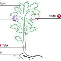 teoria_plantas_clip_image002.jpg