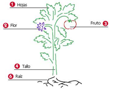 La planta y sus partes para completar y colorear - Imagui