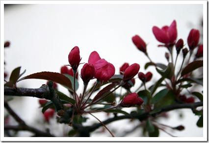 Karben in Spring__ 2011-04-10 001