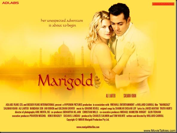 marigold-2007-3b-1_1186517947