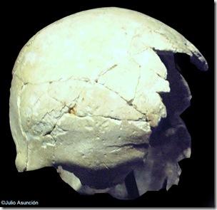 Cráneo encontrado en la cova Beneito