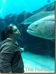 True love fish style
