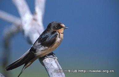 世界各国的 国鸟【续】 - 陈明远 - 陈明远的博客