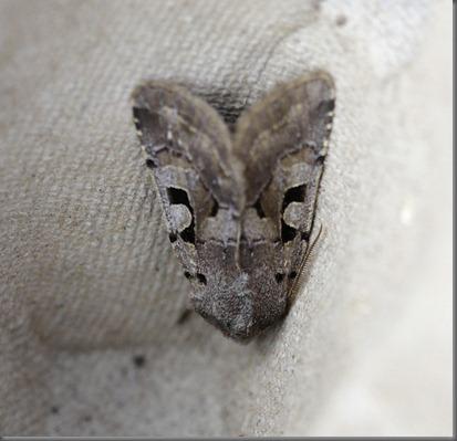 11_03_13_moths_046_hebrew_character