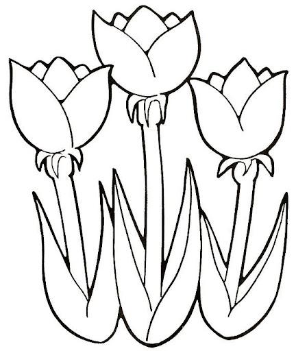Tulipanes para colorear for Plantas ornamentales para colorear