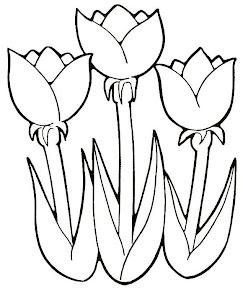 TULIPANES (7).jpg