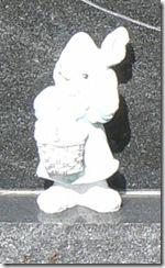 rabbit1-1
