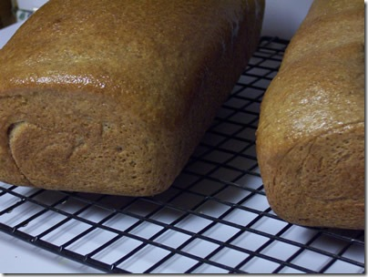 BBA-whole-wheat-bread 034