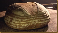 basic-savory-bread-dough 023