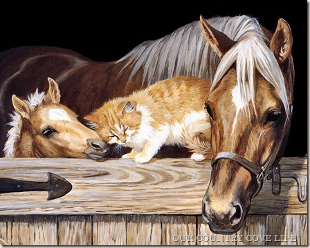 cat-being-friendly-with-horses
