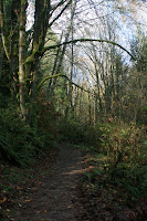 Forested Trail Photo
