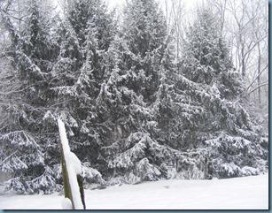 Snow 12_711 2