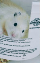 Pica the hamster