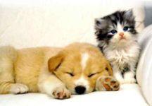 köpek kedi resmi