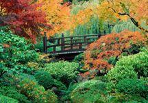 sonbahar manzarası resmi