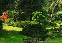 bahçe manzarası resmi