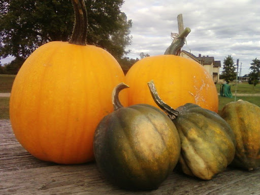 two pumpkins, three squash