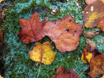 Leaves on rock
