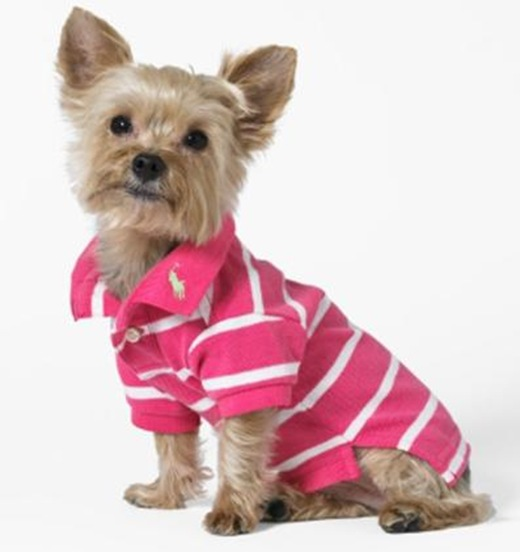 pink polo ralph lauren dogs